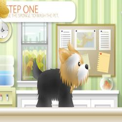 pet grooming studio